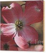 Pink Dogwood At Easter 4 Wood Print