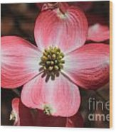 Pink Dogwood At Easter 5 Wood Print