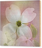 Pink Dogwood Blossoms Wood Print