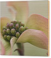 Pink Dogwood Macro Wood Print