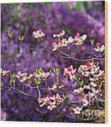 Pink Dogwood With Purple Azaleas Wood Print