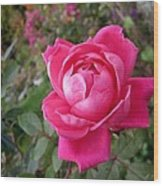 Pink Double Rose Wood Print