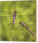 Pink Dragonflies Wood Print