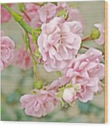 Pink Fairy Roses Wood Print