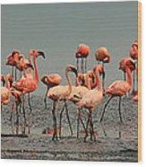 Pink Famingo Wood Print