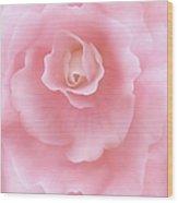 Pink Fantasy Begonia Flower Wood Print