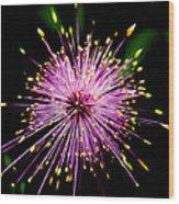 Pink Fireworks  Wood Print