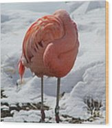 Pink Flaming In Winter Wood Print