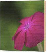 Pink - Floral Art Print Wood Print
