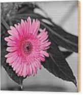 Pink Flower Wood Print by Amr Miqdadi