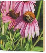 Pink Flower And Bee Wood Print