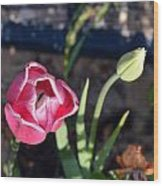 Pink Flower And Bud Wood Print