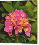 Pink Flower Austin Wood Print