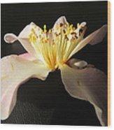 Pink Flower Azalea . Wood Print