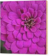 Pink Flower Blossoming Wood Print