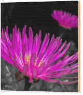 Pink Flower In A Green Grass - Splash Wood Print