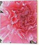 Pink Flower Wood Print