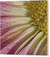 Pink Flower Macro Wood Print