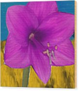 Pink Flower On A Fall Evening Wood Print