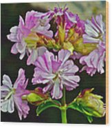 Pink Flower On Brier Island In Digby Neck-ns Wood Print