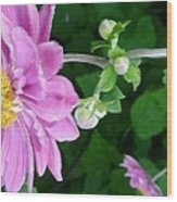 Pink Flower Shiver Wood Print