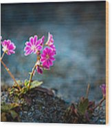 Pink Flower With Inkbrush Calligraphy Joyfulness Wood Print