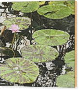 One Pink Water Lily With Lily Pads Wood Print