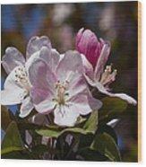Pink Flowering Crabapple Blossoms Wood Print