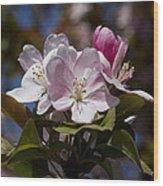 Pink Flowering Crabapple - Malus Wood Print