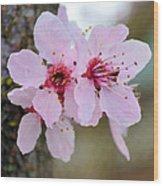 Pink Flowering Tree Floral Wood Print
