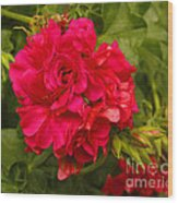 Pink Flowers Blooming Wood Print