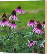 Pink Flowers In Maine Wood Print