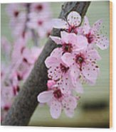 Pink Flowers On A Flowering Tree Wood Print