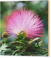 Pink Fluff Wood Print