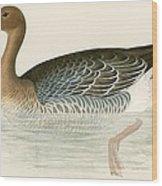 Pink Footed Goose Wood Print