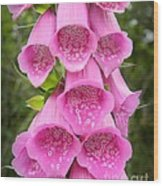 Pink Foxglove Wood Print