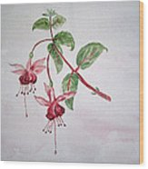 Pink Fuchsia's  Wood Print