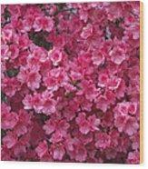 Pink Full Frame Azalea Blossoms Wood Print