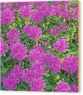 Pink Garden Flowers Wood Print