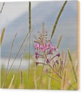 Pink Gem - Fire Weed Wildflower In Grand Teton National Park - Wyoming Wood Print