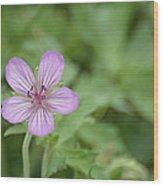 Pink Geranium In Bloom In Yellowstone Wood Print