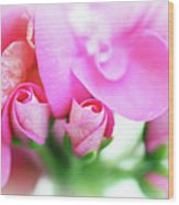 Pink Geranium Wood Print