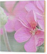 Pink Geraniums Wood Print