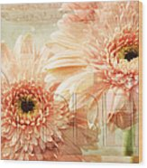 Pink Gerber Daisies 3 Wood Print
