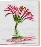Pink Gerbera Flood 2 Wood Print