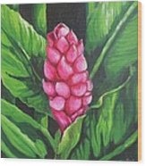 Pink Ginger Lily Bloom Wood Print