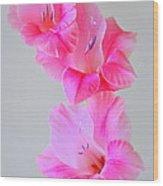 Pink Gladiola Wood Print