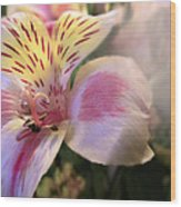 Pink Glow Lily  Wood Print