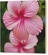 Pink Hibiscus Flowers Wood Print
