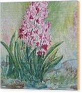 Pink Hyacint Wood Print